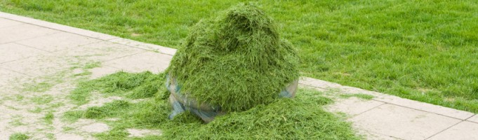 Calgary Lawn Care: To Bag or Not to Bag?