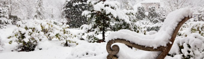 Spice up your Calgary Landscaping this Winter