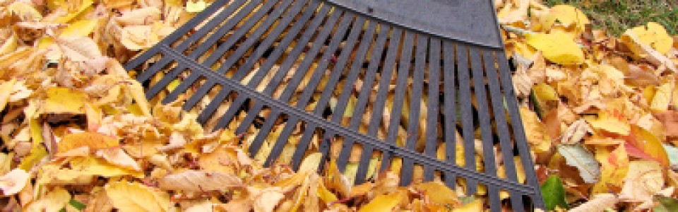 Fall CleanUp 101 – Top 10 Fall MUST-DO'S Before the Snow Flies