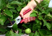 Calgary Landscape Maintenance: Pruning Tips From the Pros