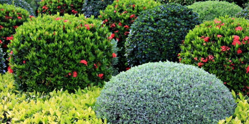 What Are The Best Shrubs For My Calgary Garden