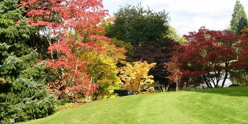 What Are The Best Trees For My Calgary Garden Mirage Landscaping
