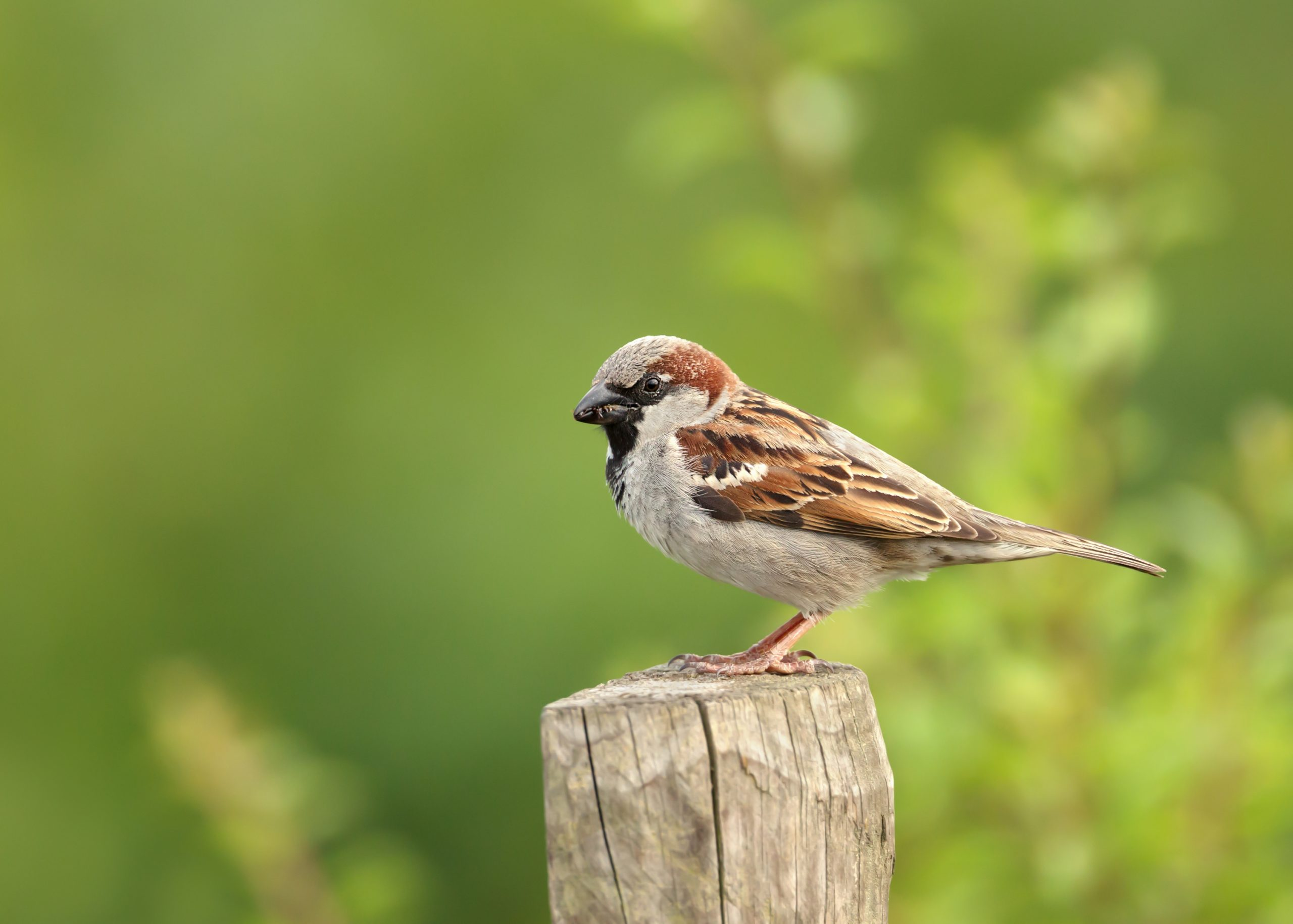 Different Types of Birds You May Spot in Your Backyard